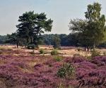 heide-heath