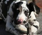 hond-met-schoen-1