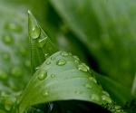 regendruppels-op-plant
