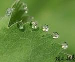 regendruppels-op-vrouwenman